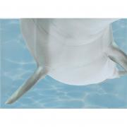 Декор Дельфин 6