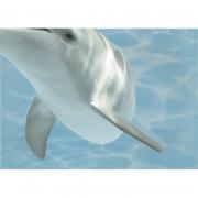 Декор Дельфин 8