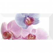 Декор Orchidea 1